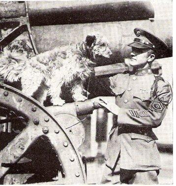 Rags the war dog 2
